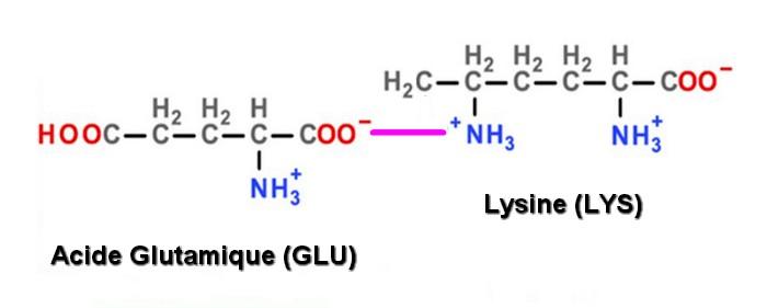 liaison ionique GLU LYS