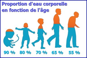 eau proportion age