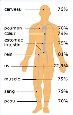 répartition eau corps humain