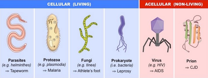 frequencethérapie types parasites